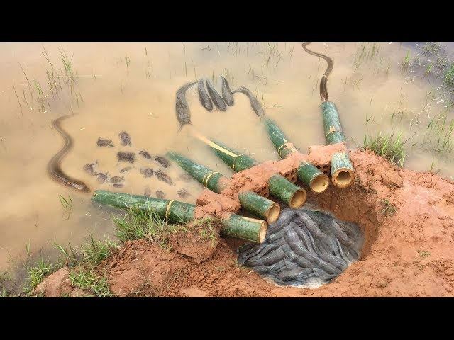 The first Trap Can Catch Alot of fish & Crabs And Eels By 5 Bambo With deep Hole