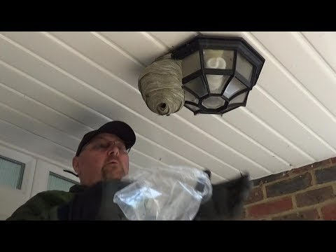 Man Destroys a Wasps Nest by Hand With a Plastic Bag