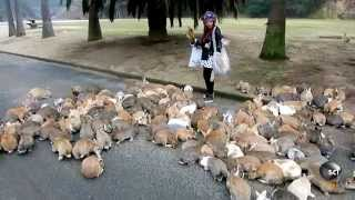 Its Always Bunny Rush Hour On This Japanese Island