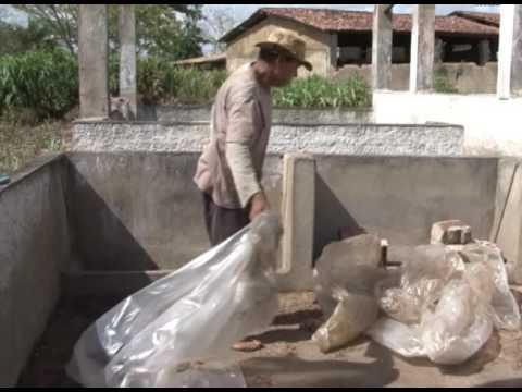 Produção de milho hidropônico - Parte 4