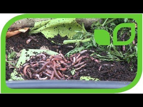 Die Folgen nach der Behandlung von den Würmern