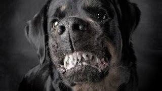 Monster Dogs (DOCUMENTARY)