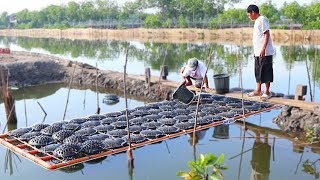 MUD CRABS & MILK FISH FARMING | How to become successful in raising  MUD CRABS & MILKFISH