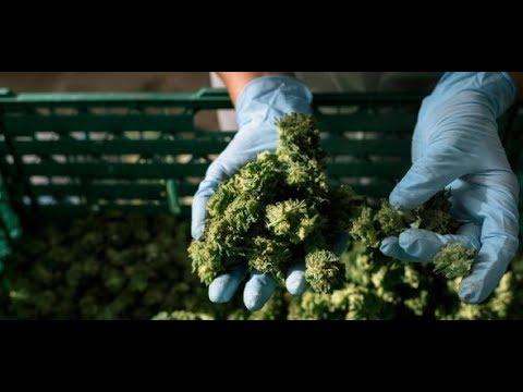 Ob das Marihuana die Impotenz beeinflusst