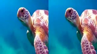 Ocean World 3D   Side by Side SBS