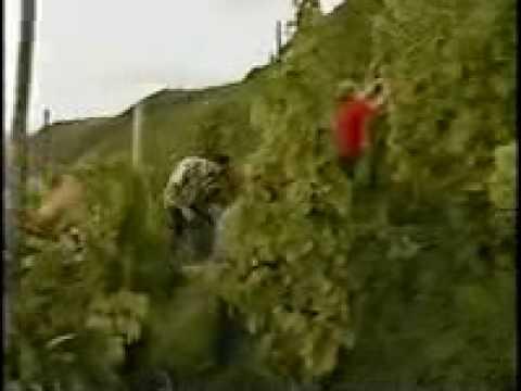 Folk remedyo enhancing buhok paglago