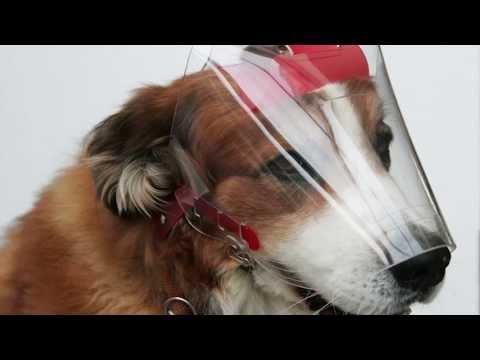OPTIVIZOR Augenschutz für Hunde