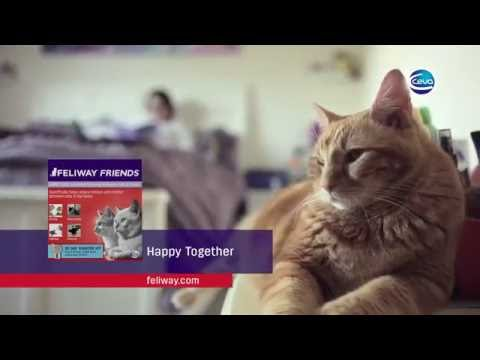 FELIWAY MultiCat 30 Day Starter Kit (48 ml) Video