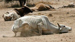 Unprecedented drought hits Mandera,Pokot, and Turkana