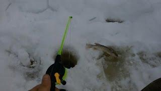 Отчет о рыбалке тавда