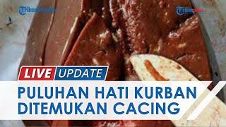 Ditemukan Cacing di Hati Hewan Kurban di Kulon Progo, Dinas Pertanian dan Pangan Langsung Musnahkan