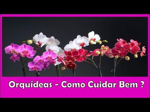Orquídeas - Como Cuidar Bem Desta Planta