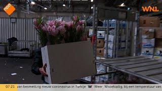 Geen Nederlandse bloemen bij paaszegen paus vanwege coronavirus: 'Enige juiste beslissing'