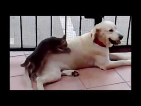 Amazing movies best funny animals