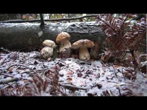 Posizione di fungo dinfezione