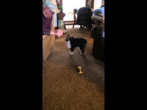 Oreo learns to dance