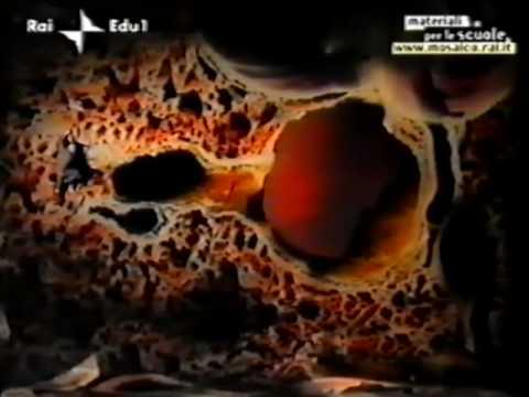 Medicina lyambliya fegato