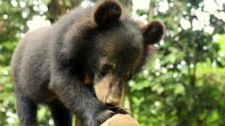 Around The Rock : Construction of an enclosure for Free The Bears NGO