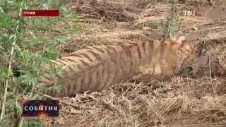 В Тбилиси более 300 животных стали жертвами наводнения, новости Грузии сегодня