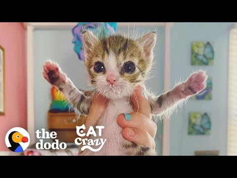 The Heartwarming Story of the Tiniest Rescue Kitten Aoife