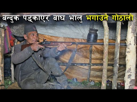 बन्दुक पड्काएर बाघ भालु भगाउने गोठालो ! - Sheep farming in Nepal
