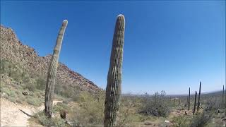 Sonoran Loop Competitive track 7 miles at the White Tanks