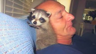 This Man Took In A Sick Baby Raccoon, But One Year Later He Wasn't Prepared For What Occurred