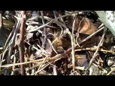 Die Rinde des Eichenholzes die Anwendung für die Potenz