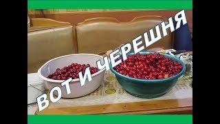 "Черешня которую спас ""Шанхайский барс"" )))"