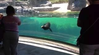 Девочка и морской лев
