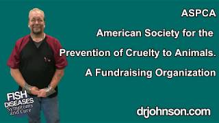 What You Should Know About the ASPCA.