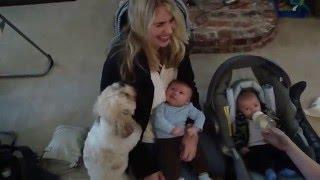 Jealous Dog Humps Mom's Arm