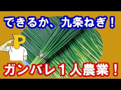 , title : 'できるか!九条ねぎ!ガンバレ!一人農業!してみる!