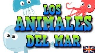 LOS ANIMALES DEL MAR EN INGLÉS - APRENDE INGLÉS CON MR PEA ENGLISH FOR KIDS