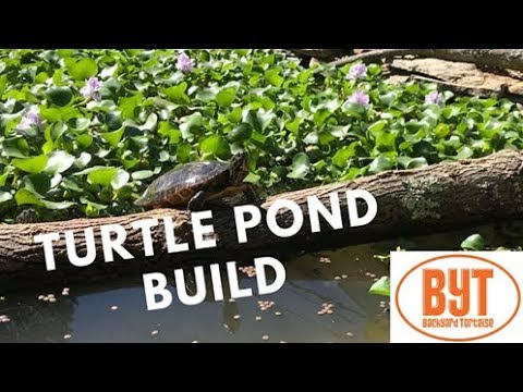 DIY Turtle Pond HEAVEN (NO FILTER!) [Build+Tips]