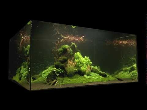 Nature's Chaos Aquascape 1 Year Old by James Findley