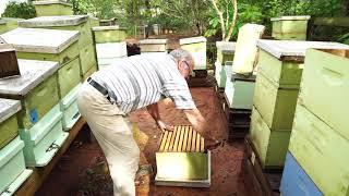 Пасека #99 Если Вашу Семью Обворовали,Что делать? Пчеловодство для начинающих
