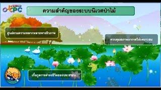 สื่อการเรียนการสอน ระบบนิเวศป่าไม้ และระบบนิเวศป่าดิบชื้น ม.3 วิทยาศาสตร์