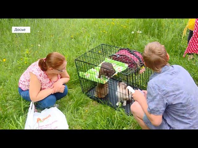 В Госдуму внесли законопроект о запрете продажи животных в зоомагазинах и на птичьих рынках