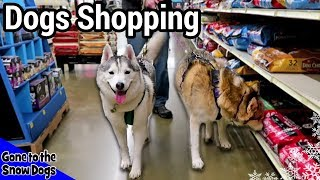 Dogs Go Shopping at PetSmart And then THIS Happened . . .