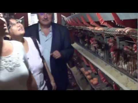 Tavuk Çiftliği Ziyareti