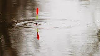 Какая рыба клюет на речке в начале ноября