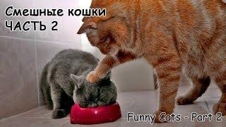 Смешные кошки, часть 2