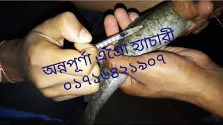 Deshi Magur fish - Free video search site - Findclip Net