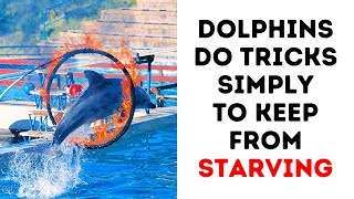 8 Reasons to Never See a Dolphin Show Again