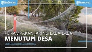 Viral Penampakan Jaring Jutaan Laba-laba Tutupi Desa, Terbentang hingga Ratusan Meter