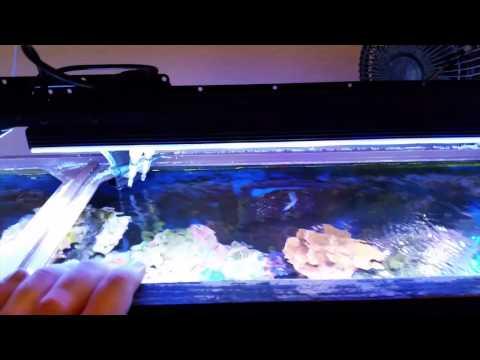DSunY programmable LED lights review