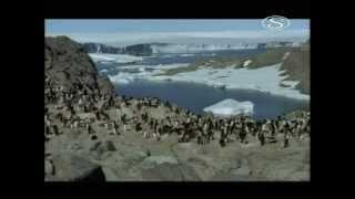 Antarktida v jednom kole (CZ znění)