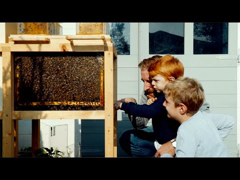 , title : 'B-Box: 1st Ever Hive Designed For Home Beekeeping