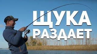Попали на раздачу щуки. Осенняя рыбалка ниже Астрахани.   Рыбий жЫр 5 сезон.